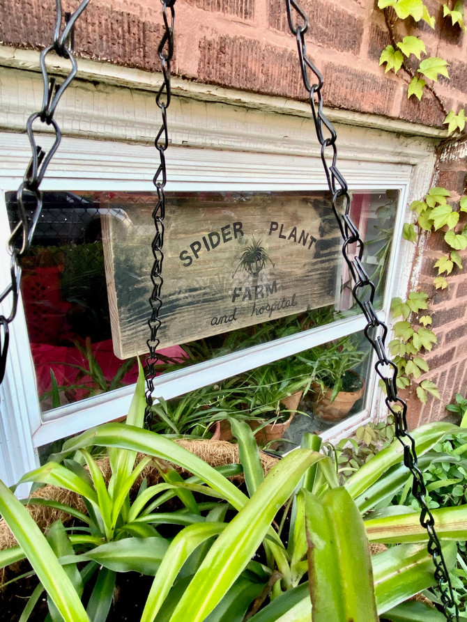 Spider Plant Farm + Plant Hospital
