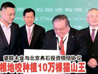 婆联木业与北京典石投资缔结协议 根地咬种植10万棵猫山王