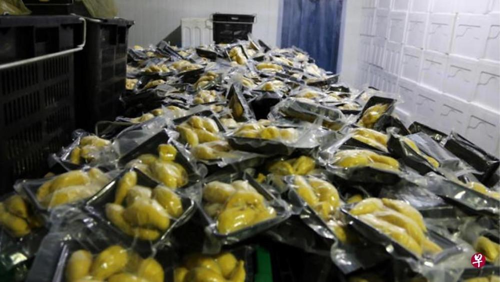 出口到中国大陆的榴梿必须去除外壳,再经过摄氏零下30度的急冻处理和真空包装。(韩咏梅摄)