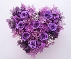 薔薇サンプル画像(紫_)