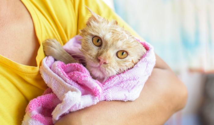 Como dar banho no seu gato