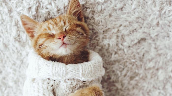 Pet: roupas e banhos com água quente não são frescura