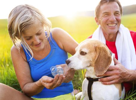 Cuidados importantes com cães idosos