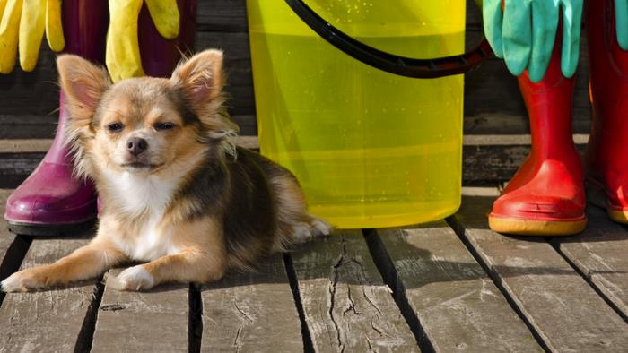 Como eliminar o cheiro do cachorro da casa