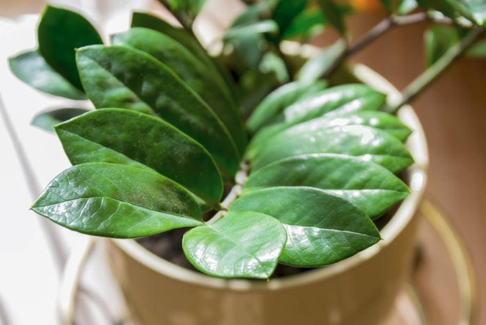 Cinco plantas para ambientes fechados