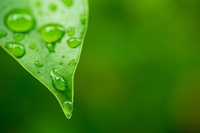 water-leave-background-green-leaf-nature