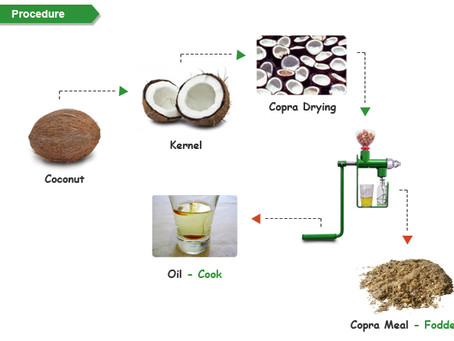 Everything about Coconut Oil