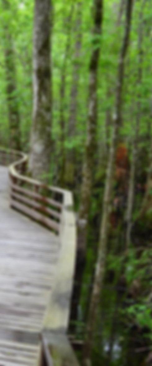 Beidler Forest.jpg