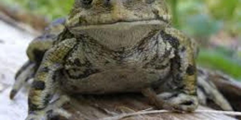 Toad Talk