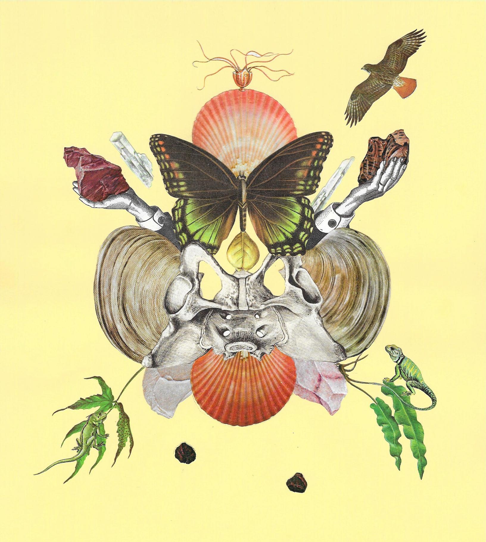 """Butterfly Bee 6"""" x 7"""" 2015"""