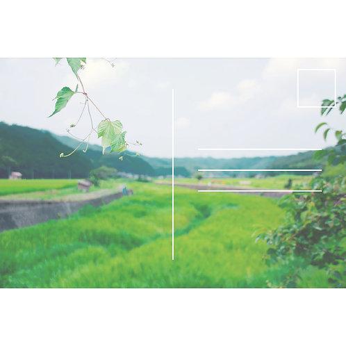 Summer Green 2 (2-1)