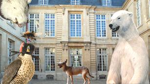 Le Musée de la chasse et de la nature rouvre ses cabinets de curiosité