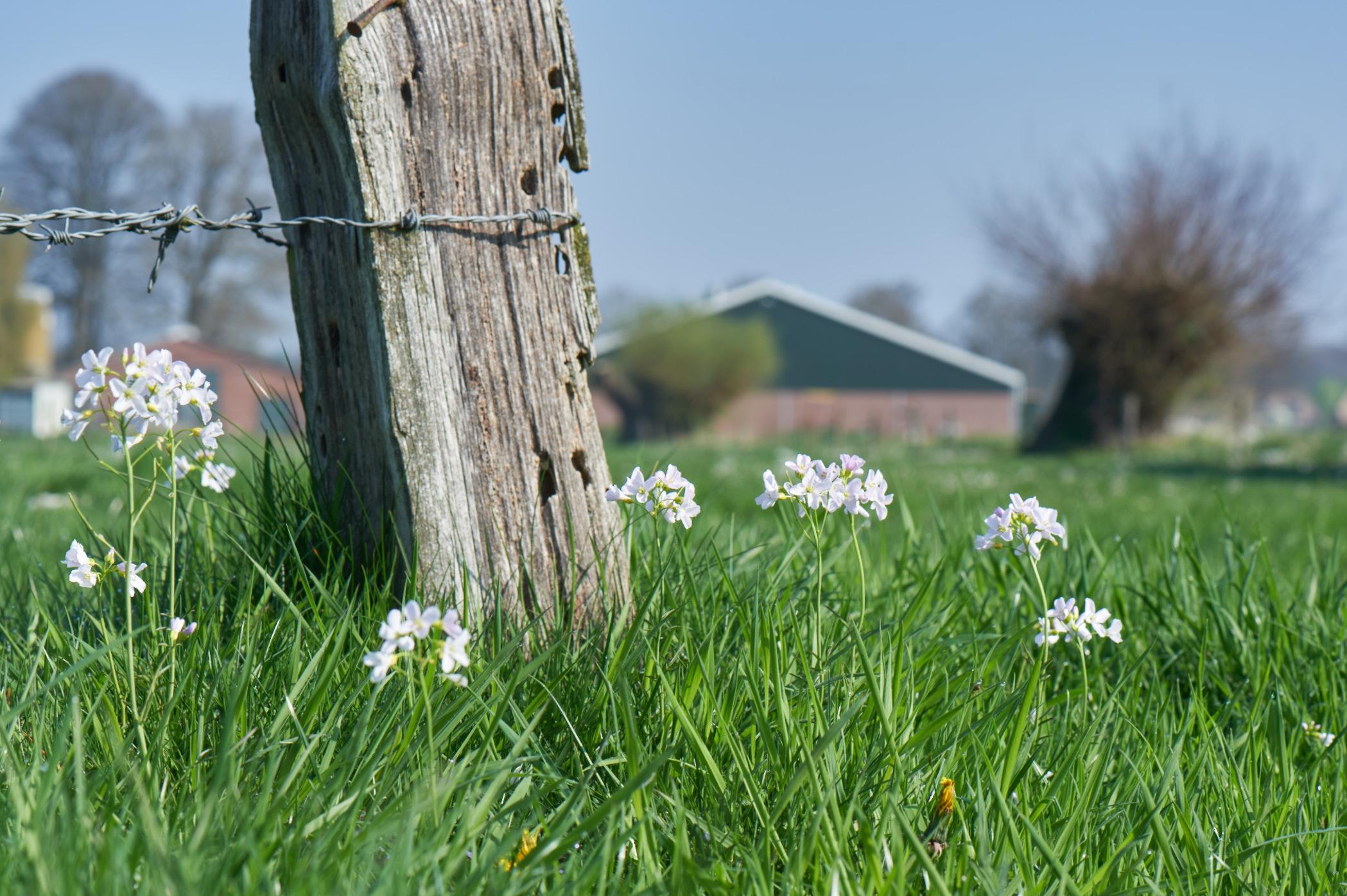 Voorjaar in de wei