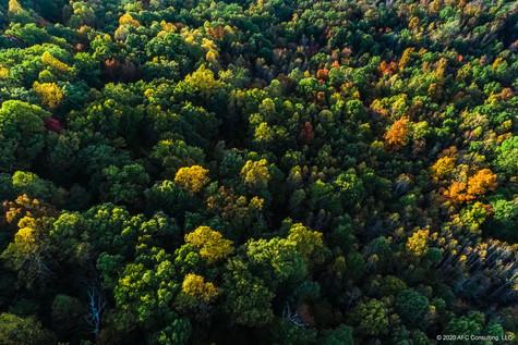 Cane Creek fall evening tree tops