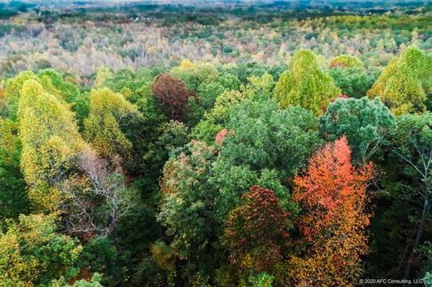 Cane Creek fall foliage