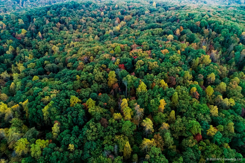 Cane Creek hardwood forest