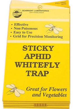 Sticky Aphid Whitefly Traps - 5 Pack