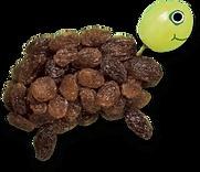 raisin-turtle.png