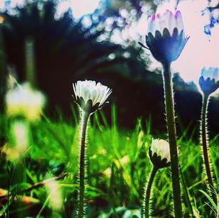 (good) mornin spring (hope sparkles inside)
