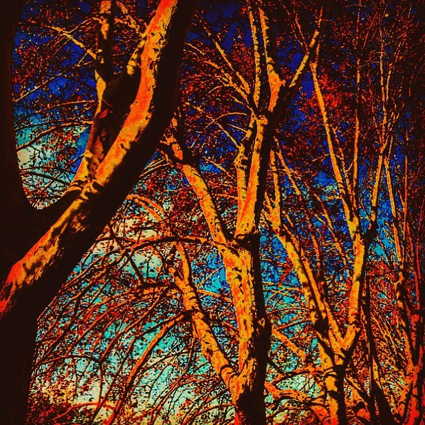 city awakes_ dancing twin trees on the river shore (psychedelicism)