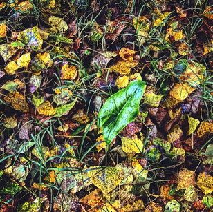 into the dew_ the burden of singularity (a visual allegory of autumn)