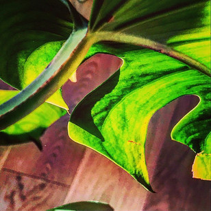 the secret life of plants (an abstract realism arabesque)