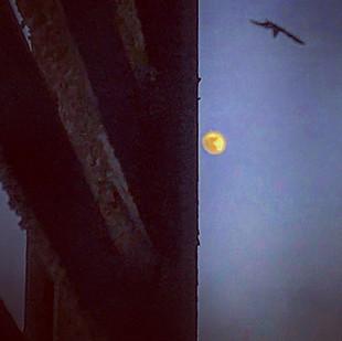 moon guardian (a preromantic tale)