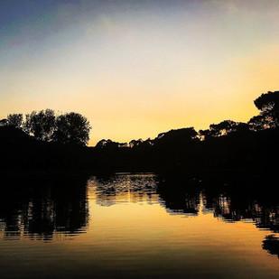golden brown from dusk till dawn (idyll)