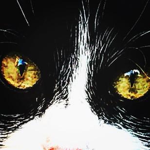me inside his eyes (hyperbolic self portrait)