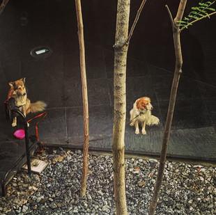dogs in the Zen garden (a view) #likeapa