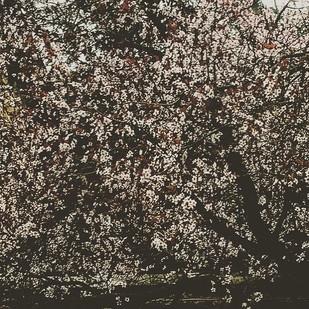 spring textures (vol.1)_ the almond tree (between Pollock and the Zen Garden)
