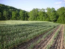 Farm Photo 6.jpg