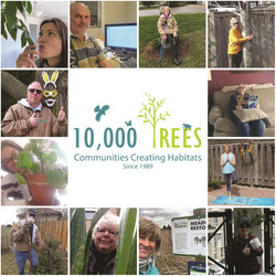 10K Trees COVID collage-01