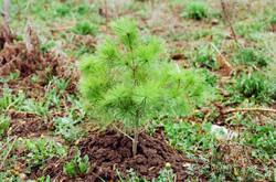 Little tree will grow