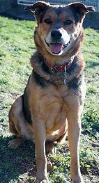 Chipper qui n'arretait pas de chipper a eu un parcours de vie tellement difficile.. Un amour de chien qui passera une grande partie de sa vie dans plusieurs refuges.. pour qui la chace aura sourit qu'après de très longues années..