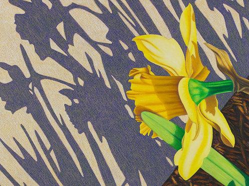 """Daffodil Diagonals II"""