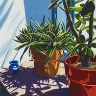 Succulent Shadows II