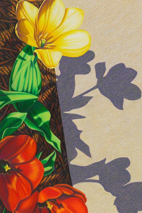 """Transfixed by Tulips II"""