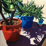 Succulent Shadows III