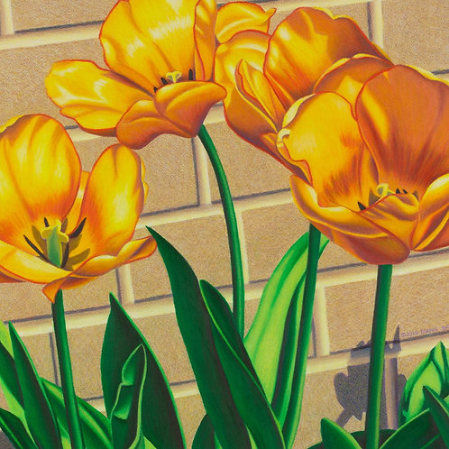 """Transfixed by Tulips V"""