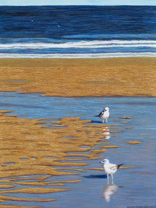 Ormond Beach II