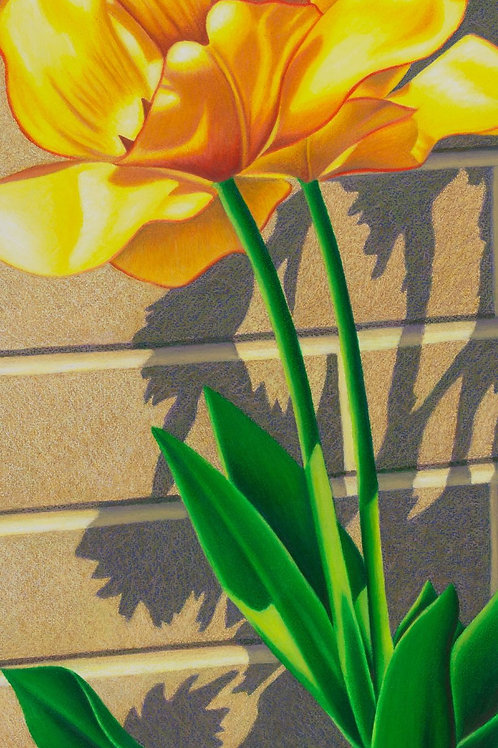 """Transfixed by Tulips IV"""