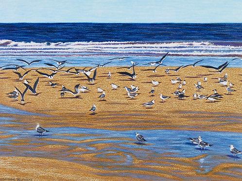 Ormond Beach V