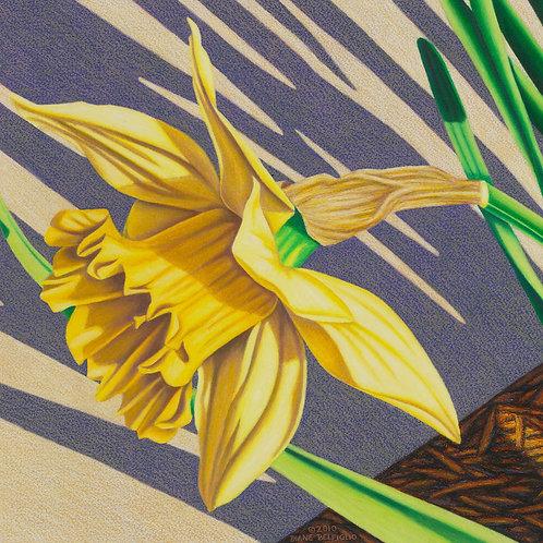 """Daffodil Diagonals IV"""