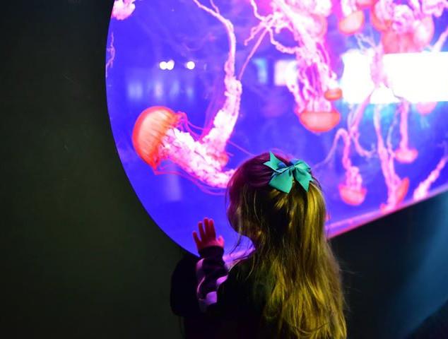 Jellyfish mesmerized