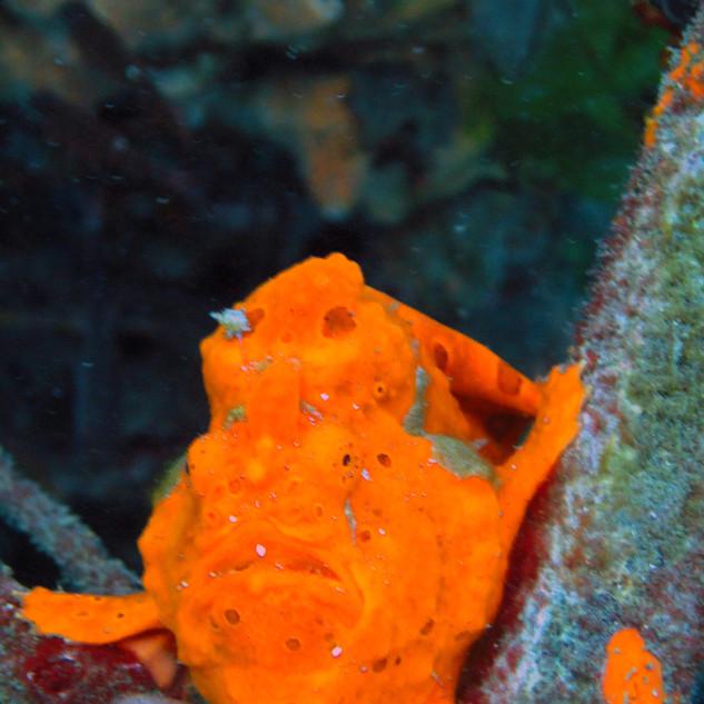 Frog Fish_DxO.jpg
