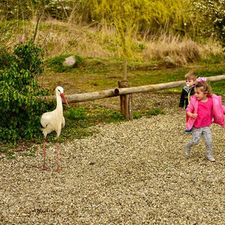Harassing a stork