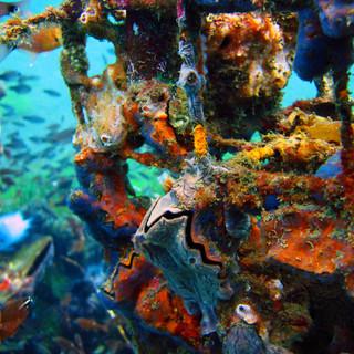 clam secret bay_DxO.jpg