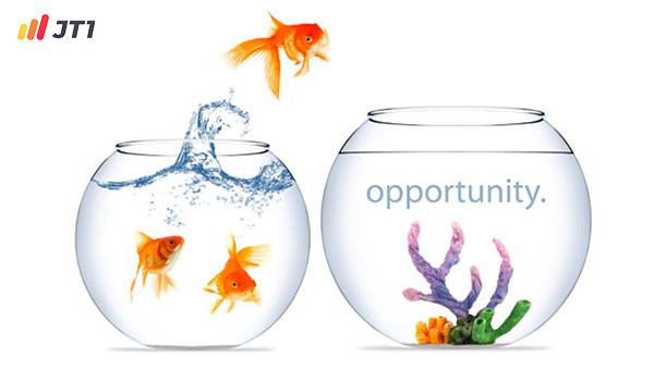 Nắm bắt cơ hội việc làm