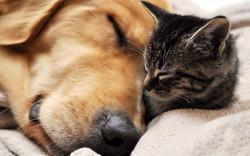 dog-and-cat-wallpaper-high-resolution-For-Desktop-Wallpaper
